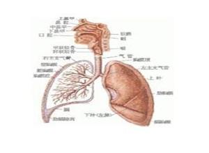 药物性呼吸衰竭