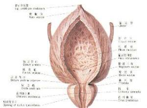 结核性膀胱挛缩