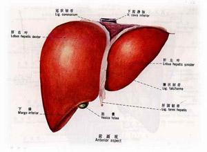 致死性肝内胆汁淤积综合征