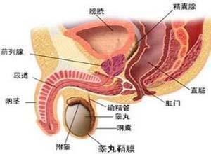 先天性睾丸发育不全