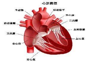 老年性心瓣膜病