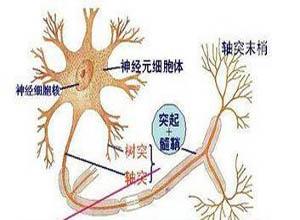 运动神经元病