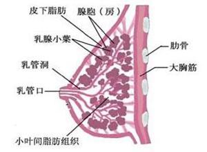产褥期乳腺炎