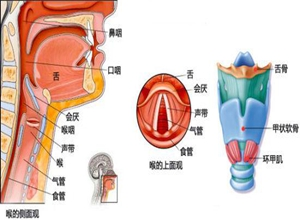 先天性喉裂