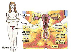 女性性高潮障碍