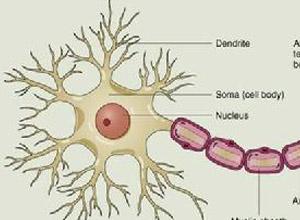 植物神经功能障碍