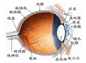 低眼压性青光眼