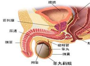后尿道瓣膜