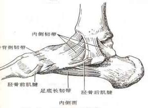 踝部急性韧带损伤