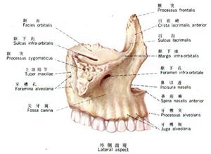 颌骨骨髓炎