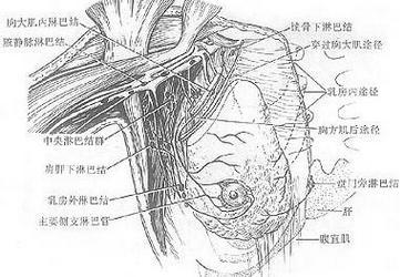 胸壁软组织损伤