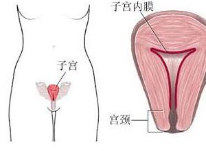 子宫内膜厚
