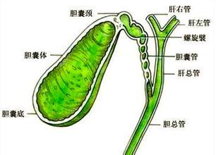 胆结石怎么治疗最好_胆总管有结石,肝管里有少许结石,有什么好的中医治疗法-患有肝 ...