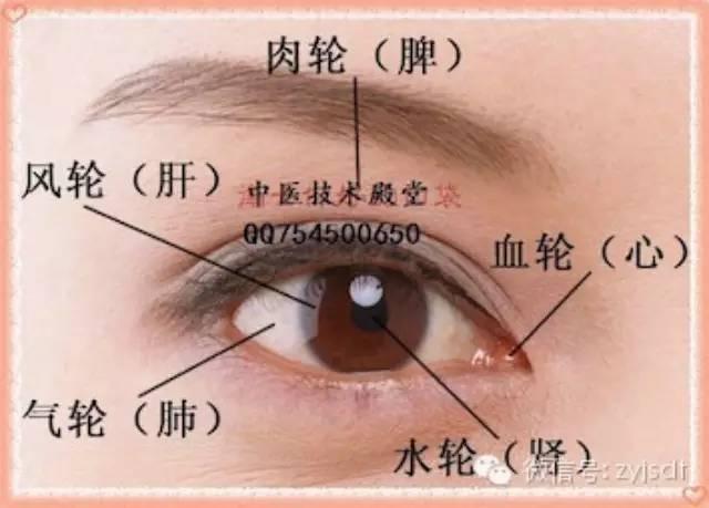 祖国医学对眼睛结构的认识,基本上和现代医学的解剖学相似.
