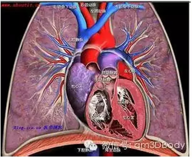 肺的结构功能,怎能如此全面!