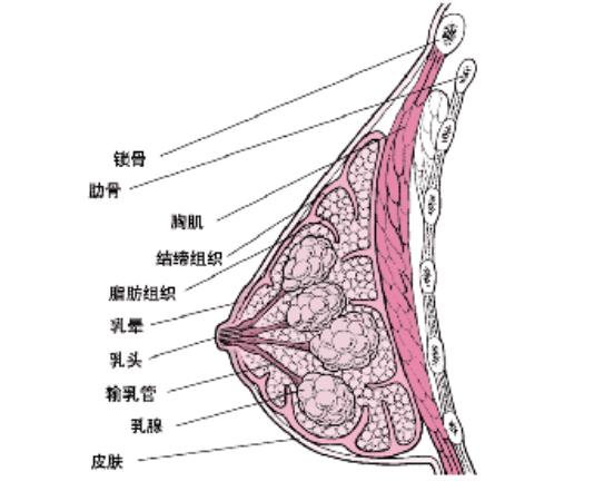 乳腺刺痛的检查鉴别