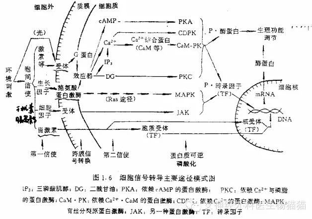 离子结构图画法