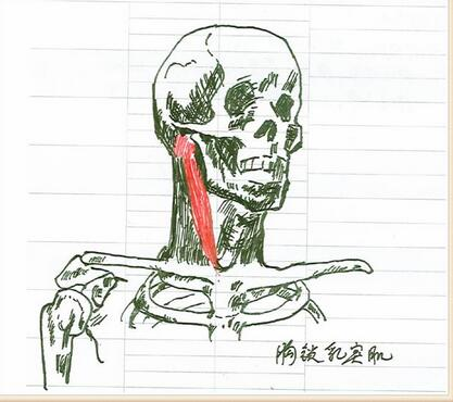 医生手绘的解剖图,请收下我的膝盖 !_医学进展-寻医问